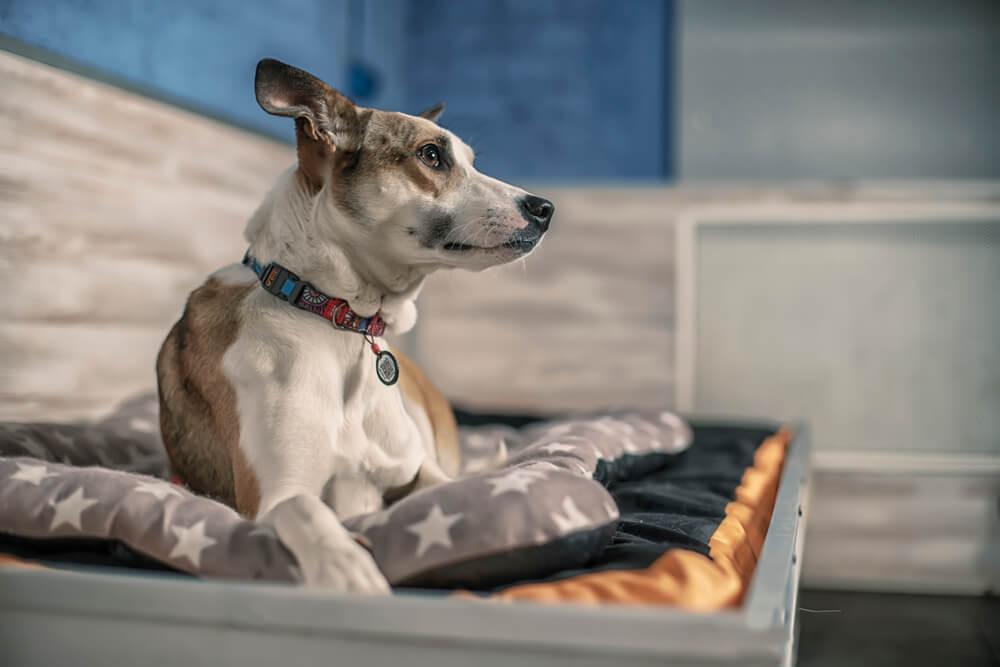 почему собаки боятся громких звуков