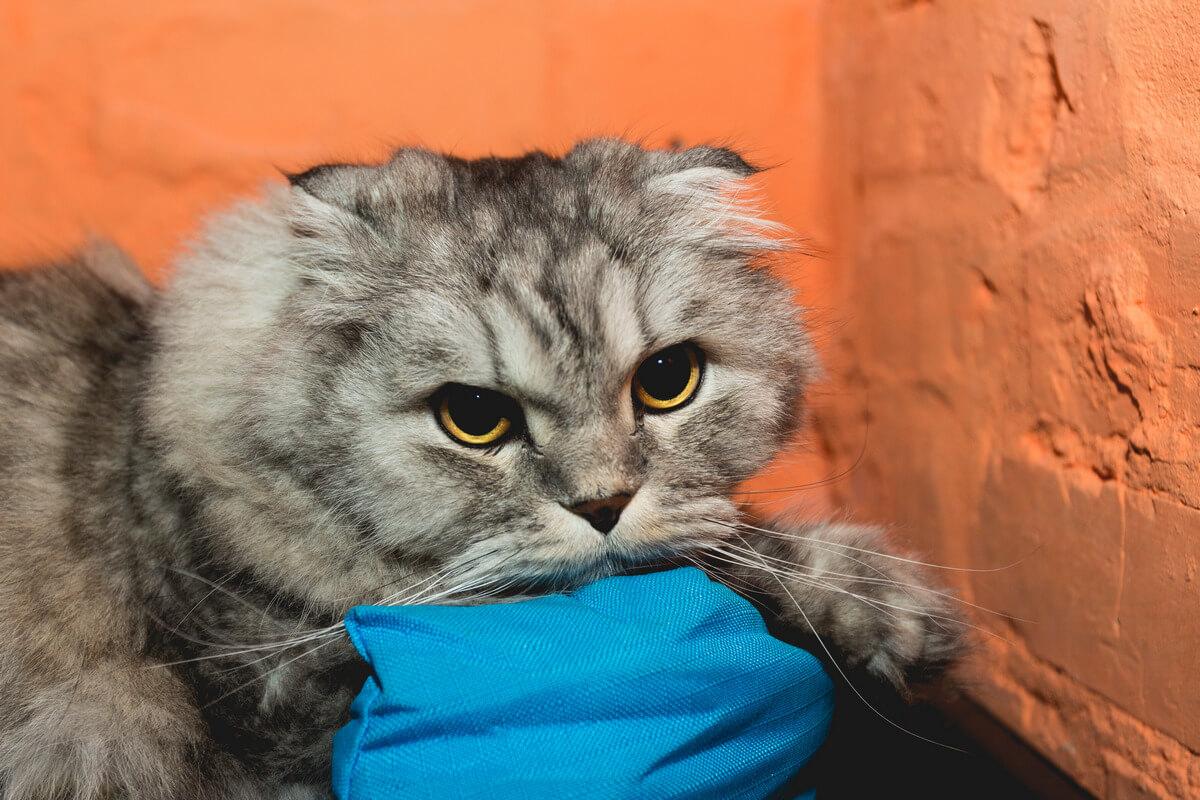 прививание кошек
