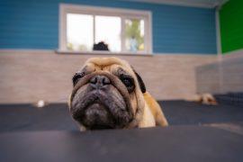 Собака стала боятся салютов, грома или других резких звуков