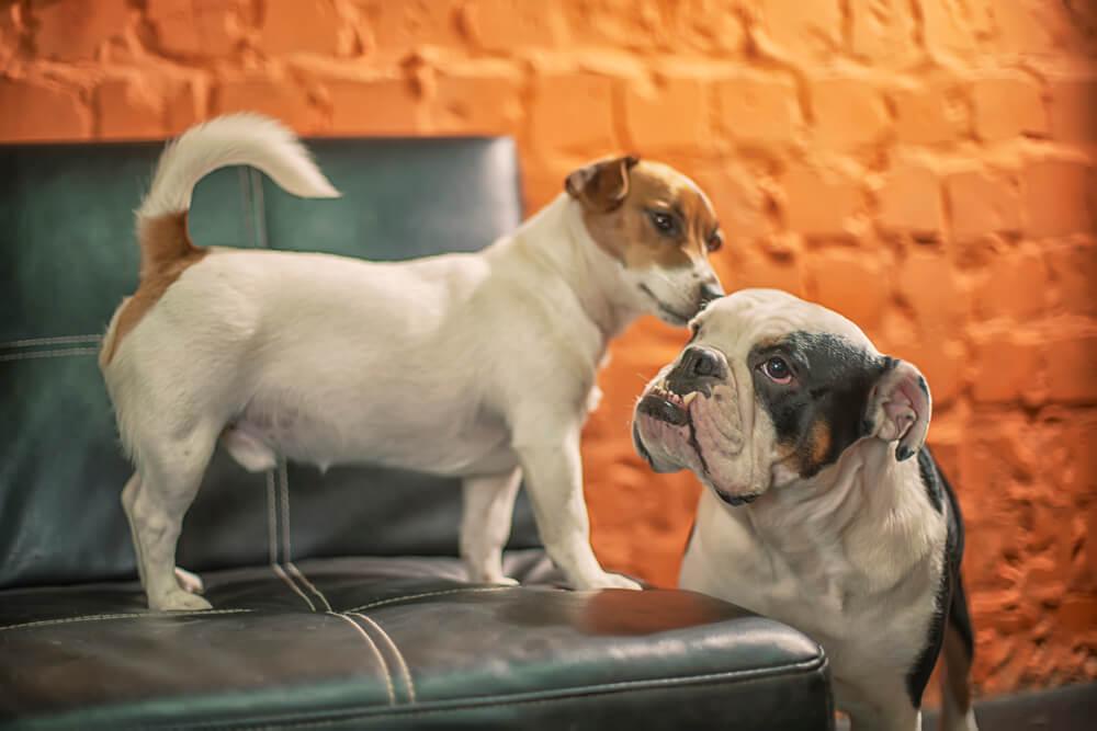 как приучить собаку к лотку