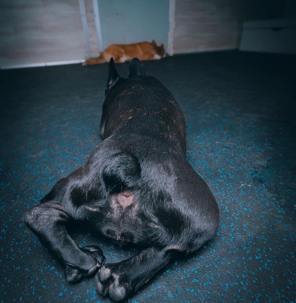 как приучить собаку проситься в туалет