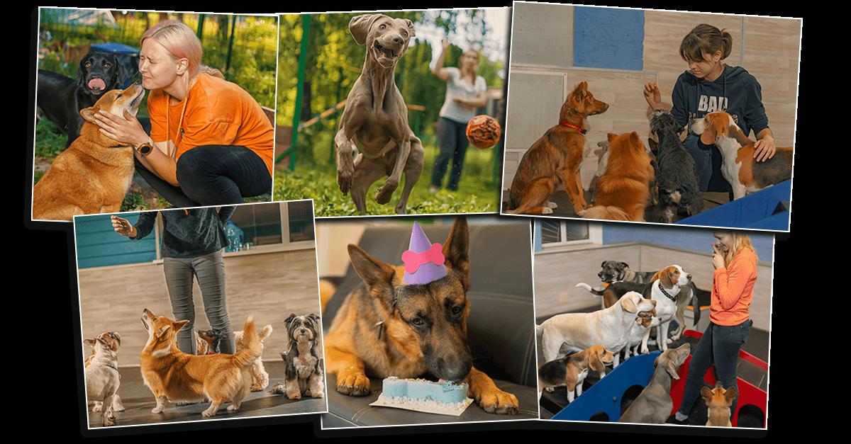 кадры из жизни центра для домашних животных Дог Сити