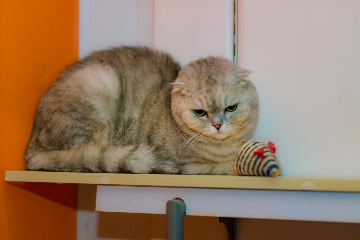 скучает ли кошка по хозяином
