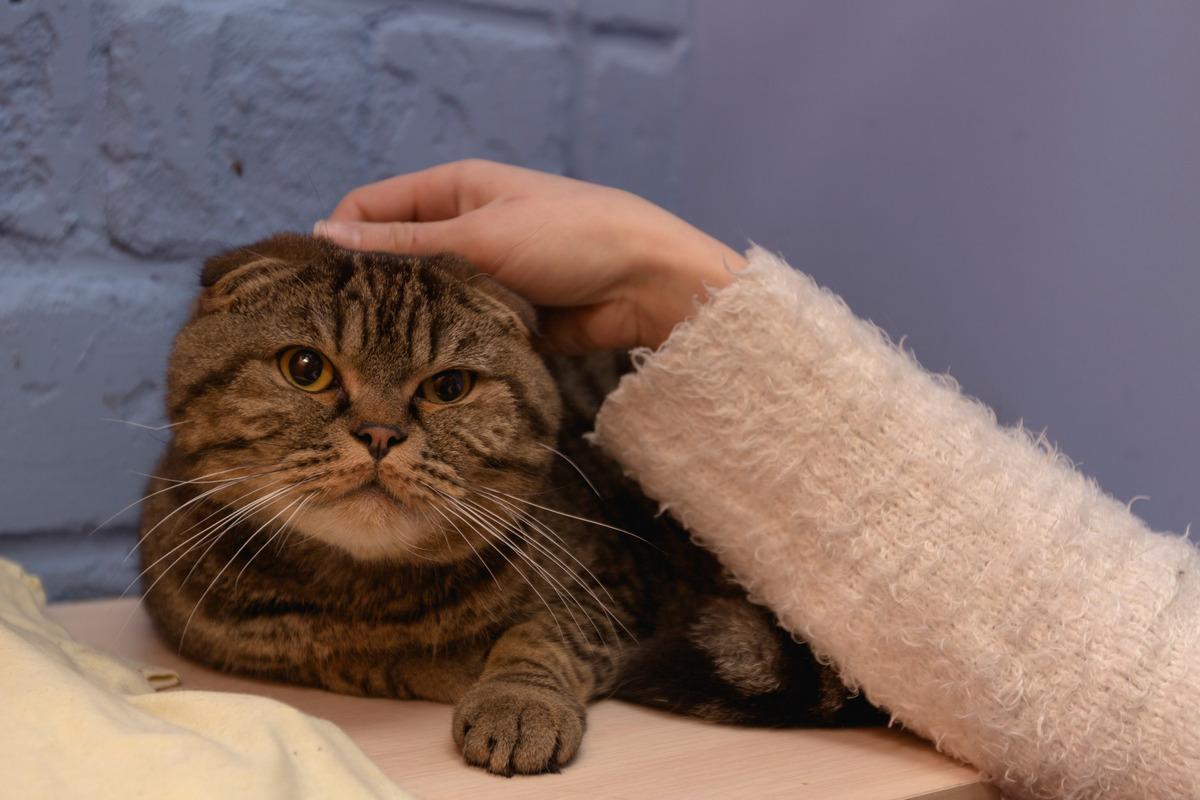 скучает ли кот по хозяину