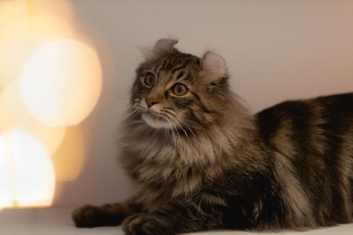 скучают ли коты по своим хозяевам