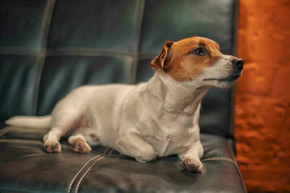 для чего собаки нюхают и лижут мочу