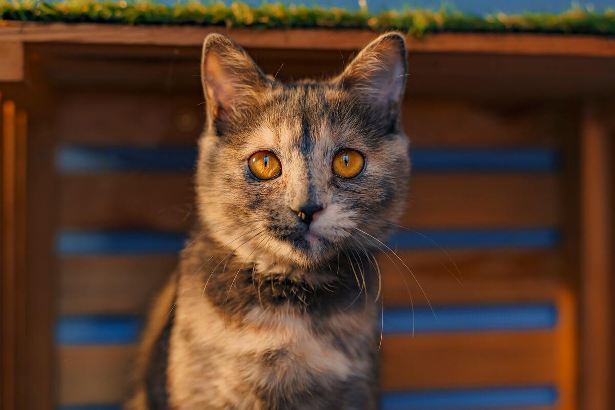 кошка активна ночью