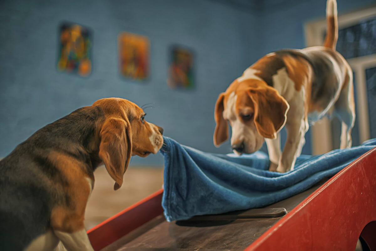 как приучить собаку жить на два дома