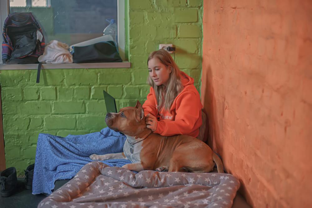 собака живет на два дома
