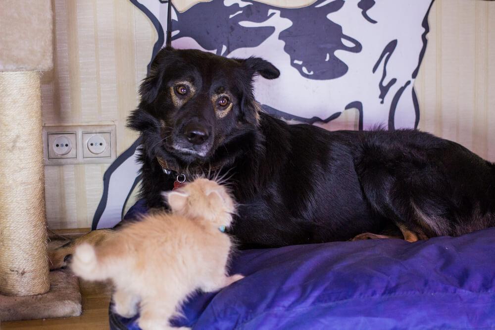 дружба между кошкой и собакой