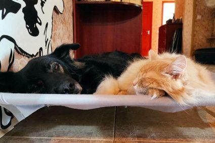 Знакомство новой кошки с собакой: как сделать все правильно