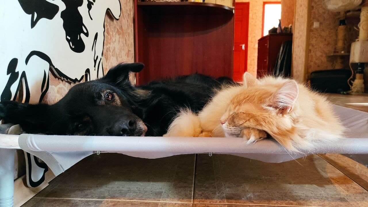 как может ужиться кошка и собака