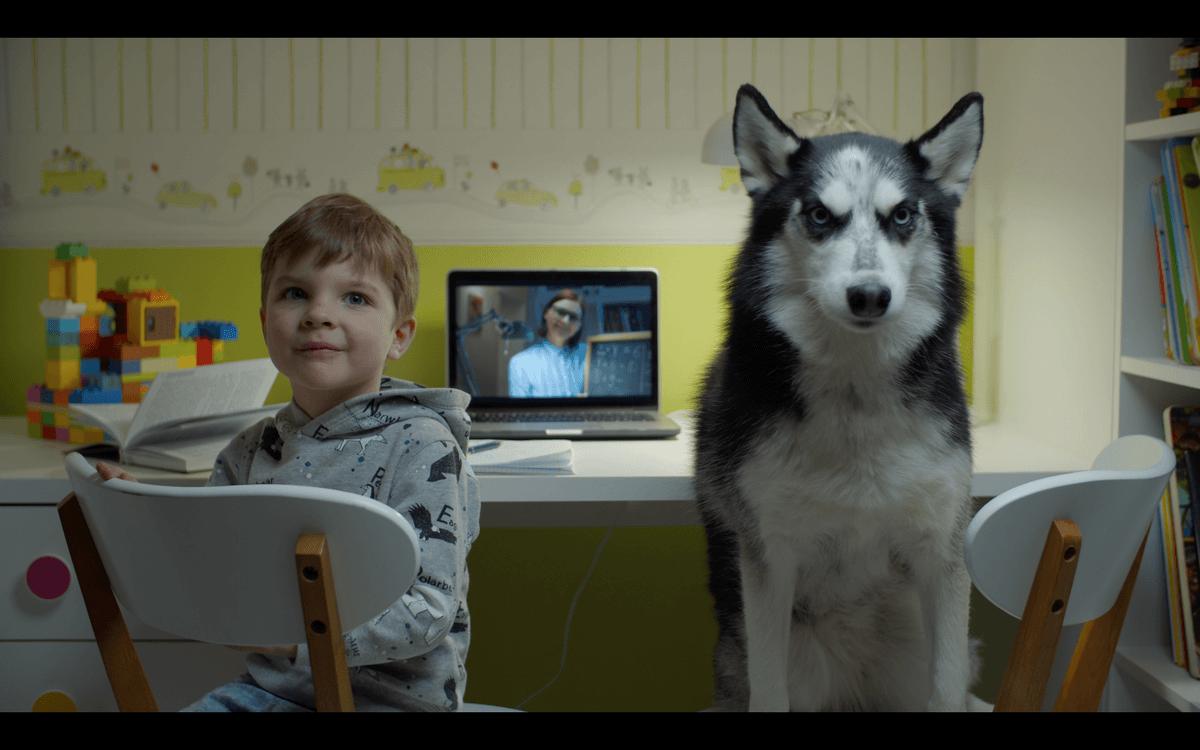 как познакомить собаку с ребенком