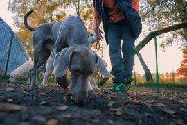 Как отучить собаку от погони за белкой или котом?