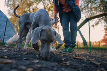 как отучить собаку гоняться за котами и кошками